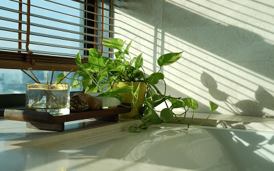 Are Energy Efficient Windows Worth the Investment?