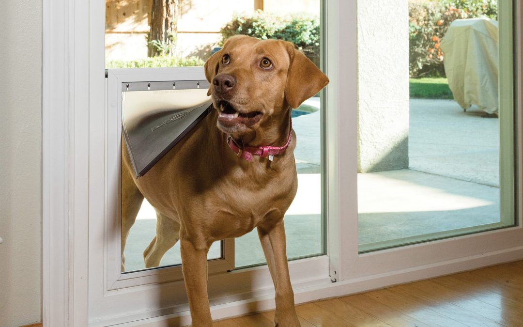 Anlin's Freedom+ In-Glass Pet Door | American Windows of DFW